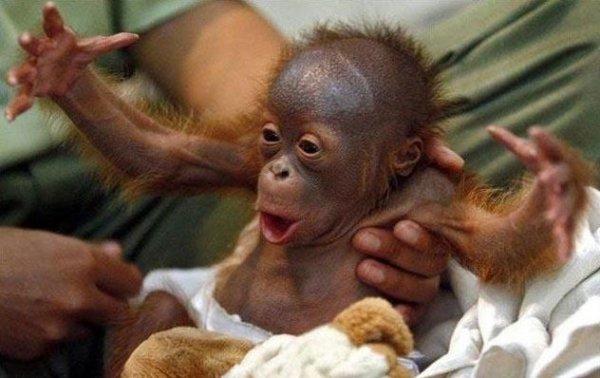 filhote-de-macaco