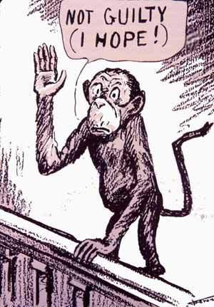 Reu macaco